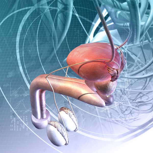 Effects of Aging on the Male Reproductive System