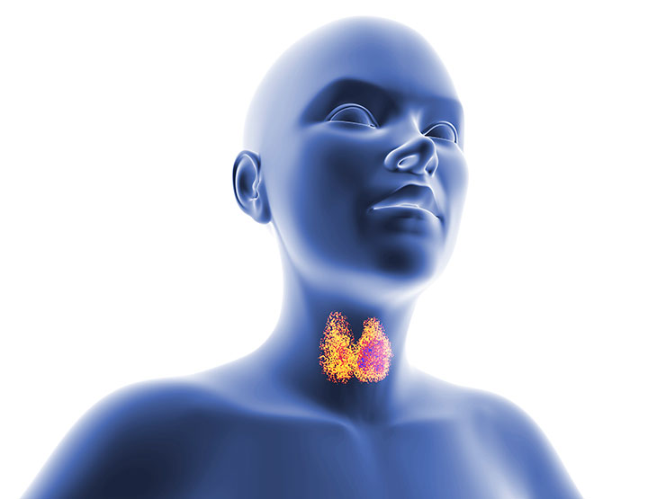 Controversies on Screening and Treatment of Hypothyroidism—Commentary